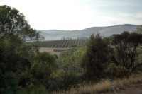 More views of vineyards