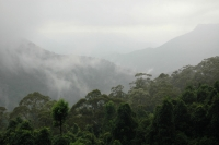 A grey day in the Blue Mountains